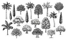 Big Set Of Trees.
