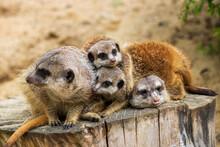 Animals In The Botanical Garden