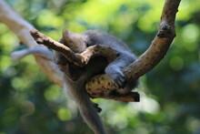 Monkeys At Sacred Forest Sanct...
