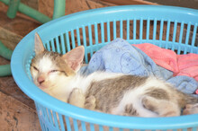 A Cute Sleep In A Blue Basket.