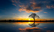 canvas print picture Panorama silhouette tree in africa with sunset.Tree silhouetted against a setting sun reflection on water.Typical african sunset with acacia trees in Masai Mara, Kenya.