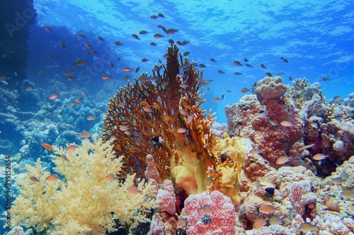 Valokuva Beautiful tropical coral reef with diverse hard and soft corals and shoal of cor