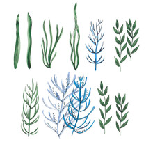 Watercolor Illustrations Of Seaweeds. Hand Painted Sketch Of Green And Blue Sea Plants.