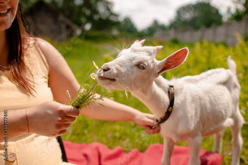 Cuadros en Lienzo a woman with her goat sits on the grass and feed it