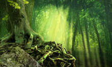 Green Dark Forest, Sun Rays, Old Tree With Crooked Interlaced Roots And Rock