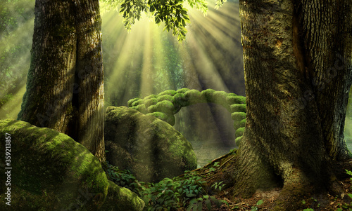 Canvas Print Forest landscape with stone bridge, sun rays, mossy rocks, old trees