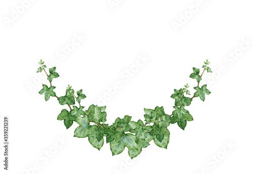 Fotografía Ivy arch green bouquet watercolor illustration