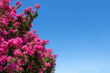 Pink Flowers In A Clear Blue Sky