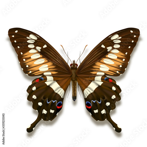 Fotografía Western emperor swallowtail butterfly with with black brown velvet wings and whi