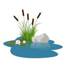 Bush Reeds With Water Lily Flowers And Leaves Close To Stone On The Water. Reeds Stern And Grey Stone Reflected In The Lake Water With Water Rounds