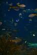 Ripley's Aquarium of the Smokies in Gatlinburg with a big tanks with fish