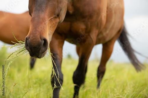 Foto Pferd im langen Gras