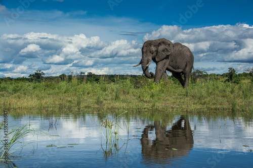 African Elephant, Wildlife scene in nature habitat Canvas Print