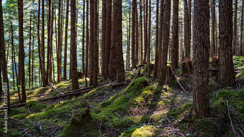 Forest with trees in summer