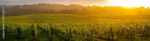 Leinwand Poster Sunset landscape, Bordeaux wineyard, Langoiran, france