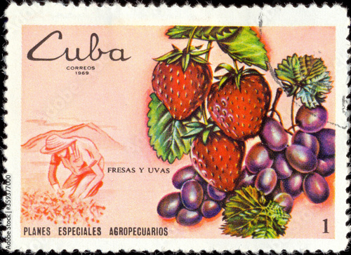 Fototapeta CUBA - CIRCA 1969: A stamp printed in Cuba, shows strawberries and grapes, circa
