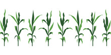 Corn Stalks Vector Illustration Isolated On White