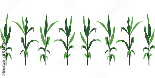 Valokuvatapetti Corn Stalks Vector Illustration Isolated on White