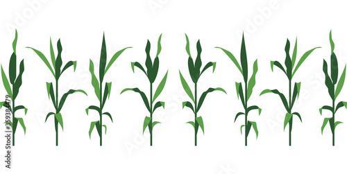 Fotografia, Obraz Corn Stalks Vector Illustration Isolated on White