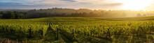Sunset Landscape, Bordeaux Win...
