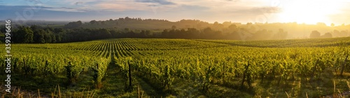 Obraz Sunset landscape, Bordeaux wineyard, Langoiran, france - fototapety do salonu