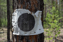Old Tactical Paper Target On Tree Located On Military Shooting Range For Active Game Airsoft.