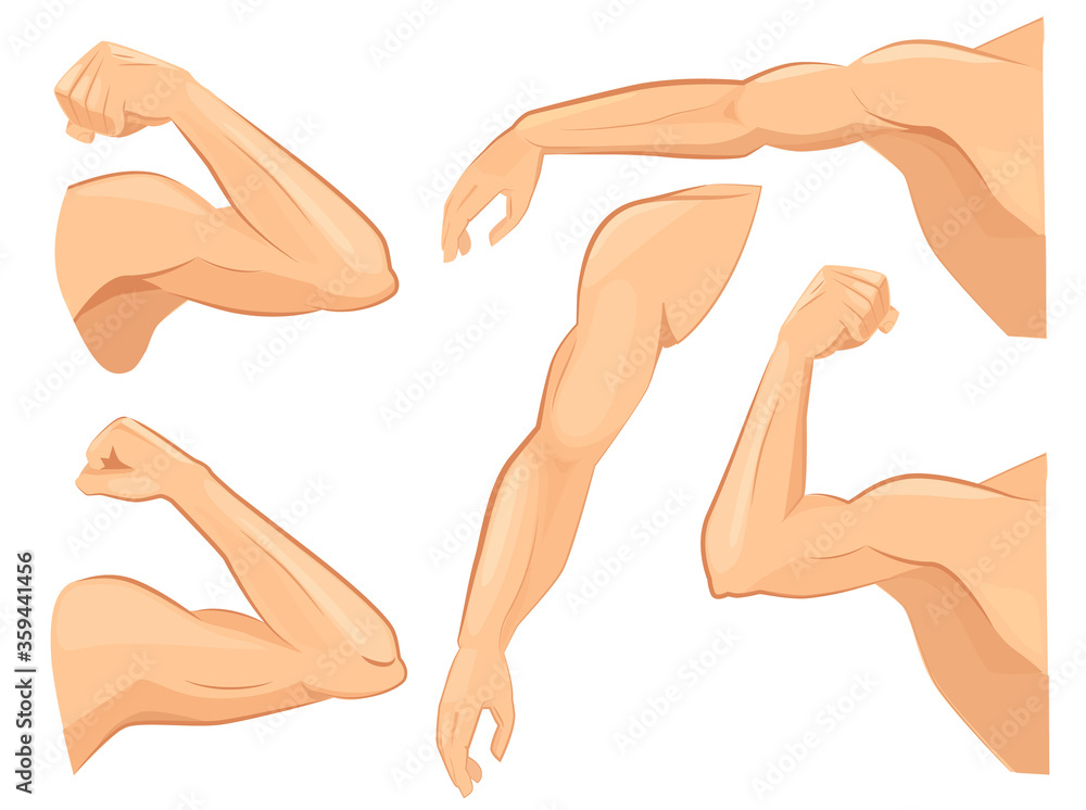 Fototapeta Muscle hands. Male power body muscles strong biceps vector cartoon sport illustrations. Strong power arm, hand and shoulder strongman