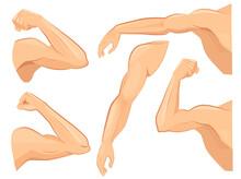 Muscle Hands. Male Power Body ...