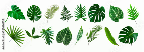 Photo set of green monstera palm and tropical plant leaf isolated on white background