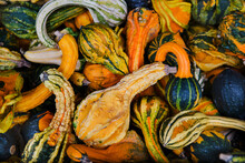 Colorful Gourds For Sale At The Market