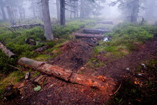 Decomposing Remains Of Wooden Walking Path Pavement In The Forest During Foggy Weather, Jeseniky, Czech Republic