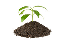 Green Plant Growing On Soil Is...