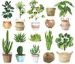 Watercolor House Plants Clipart. Indoor Plants  Elements. Monstera, Cactus Illustration. Boho Home Decor Clipart. Home green garden. Plants in pots.