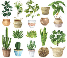 Watercolor House Plants Clipar...