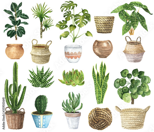 Indoor Plants Clipart (Grafik) von lena-dorosh · Creative Fabrica