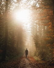 Man Walking In The Autumn Woods