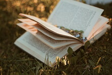 Old Book On Grass