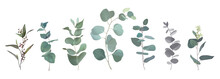 Mix Of Herbs And Plants Vector...