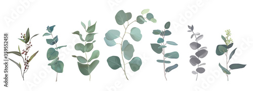 Mix of herbs and plants vector big collection Fototapete
