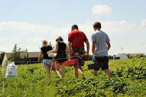 Photo agritourism, working in the field. Collecting fruits.
