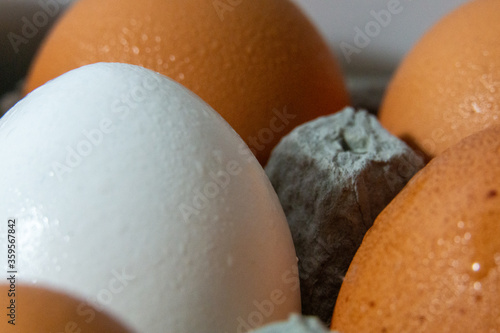 Close Up White Egg in the Middle of Brown Eggs Large in carton fresh wet eggs stock photograph