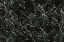Schwarz Weiß Blätter Und Pfl...