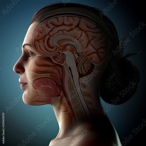 Photo 3d rendered medically accurate illustration of a female head anatomy