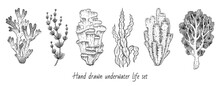 Coral, Sea Weed Sketch Graphic Elements. Underwater Icon Set. Trendy Coral Reef, Seaweed Under Water Collection. Black Line Engrave Style. Cool Hand Drawn Vector Illustration Isolated White Background