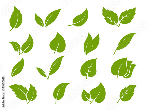 Fototapeta Leaves icons. Young green leaves trees and plants various shapes, herbal tea leaf eco, bio foliage landscaping environment vector set obraz