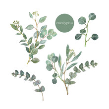 Watercolor Greenery Eucalyptus Bouquet Illustration. Hand Painted Branches Of Sage Green Eucalyptus Leaves, Branches, Foliage, Isolated On White Background. Beautiful Floral Arrangements Set