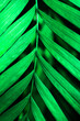 Leinwandbild Motiv green leaf background