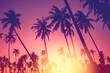 Leinwandbild Motiv Copy space of tropical palm tree with sun light on sky background.