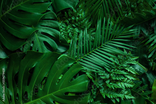 closeup-nature-view-of-tropical-green-monstera-leaf-and-palms-background-flat-lay-fresh-wallpaper-banner-concept