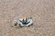 Crab Sand Beach Close Up Summer Vacation